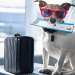 Авиаперевозки животных без сопровождения